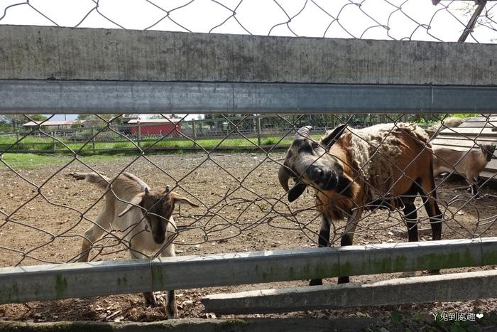 吉蒸牧場動物